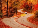 curvey autumn road