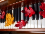 ✿⊱•╮Maple Leaf Music╭•⊰✿