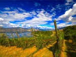 Kettle Valley Vineyard, British Columbia