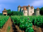 Cahors Wine Trees Castle, France