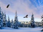 Eagles Winter Monring