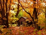 Secluded Cottage in Autumn Forest