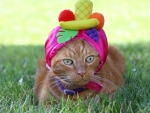 Cat in a tropical hat