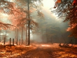 Misty autumn day