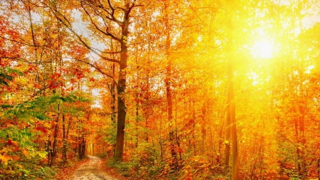 Bright Sunshine in Autumn Forest - Sunshine, Forests, Autumn, Nature, Trees