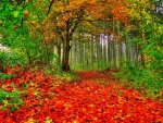 Autumn Forest Path of Red Leaves