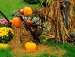 ✿⊱•╮Autumn Display╭•⊰✿