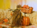 ✿⊱•╮Harvest of Fall╭•⊰✿