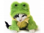 Kittenfroggy
