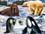 Arctic Wildlife F