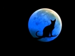 Blackcat & Blue Moon