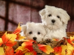 Cute autumn puppies