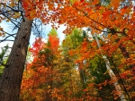 Bright Autumn Forest Tree Leaves