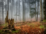 Autumn Forest Engulfed in Fog