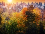 Thick Autumn Forest