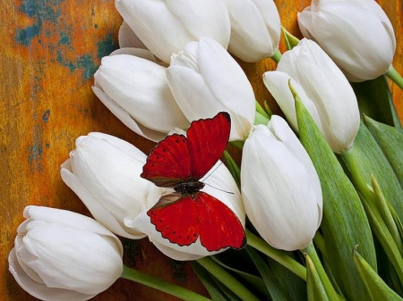 Wings on the tulips