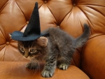 Little kittywitchy