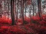 Path in Red Autumn Forest