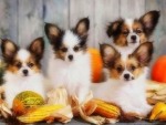 Puppies of Harvest