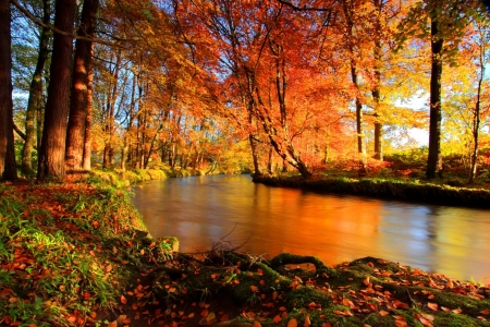 River in Autumn Forest - autumn, river, foliage, nature, forest, fall