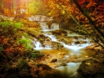 Autumn forest cascades