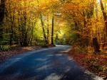 Road in Fall Forest Foliage