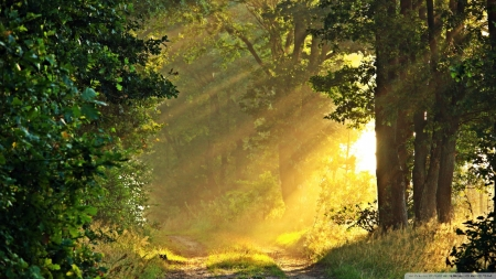 Sunny Morning, Forest Path - forests, nature, trees, autumn