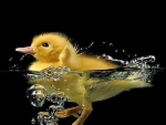Not a rubber ducky