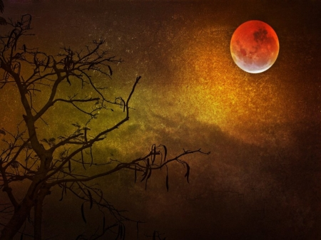 Red Moon - Nature, Trees, Sky, Night