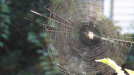 spider web first light - spiderweb, highlights, insect, nature