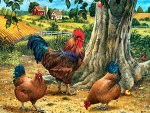 Rooster and Hens F