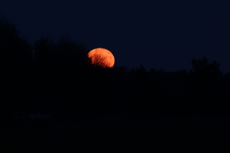 Supermoonrise - moon, space, night, supermoon