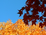 Autumn's Primary Colors (II)