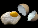 Ready-fried Egg