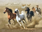 Arabian Horses in the Desert F