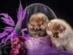 Puppies in purple basket