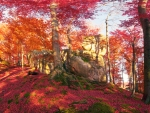 Red Autumn Forest Foliage