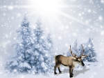 Reindeer in Snowy Forest