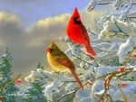 Winter Color Cardinals
