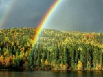 Rainbow above the Forest