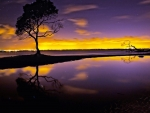 Beautiful Gold & Purple Evening