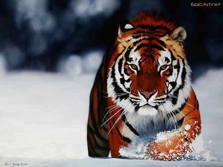 Tigre, tiger - tigre, wonderful, liutas