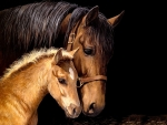Mare and Foal Horseheads F