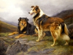 Collies on a Rock F