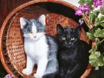 Kittens in a Basket FC