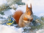 Squirrel and bird