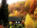 Cottage in Autumn Forest