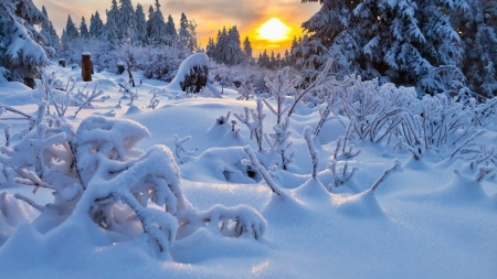 Amazing Winter Landscape - ice, winter, sunset, landscape, forest, nature, trees