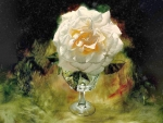 White Rose in Crystal Vase