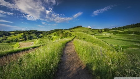 Countryside Dirt Road - landscapes, road, grass, green, nature